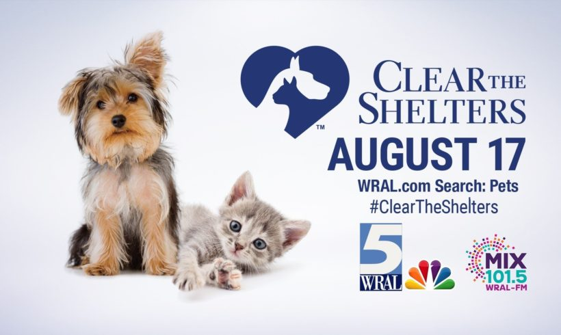 Clear the Shelter