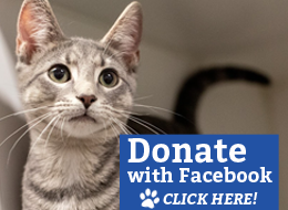 Donate with Facebook